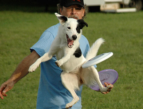 Flying Dog ~ Image 2